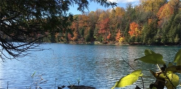 Trees along Green Lakes in the Fall
